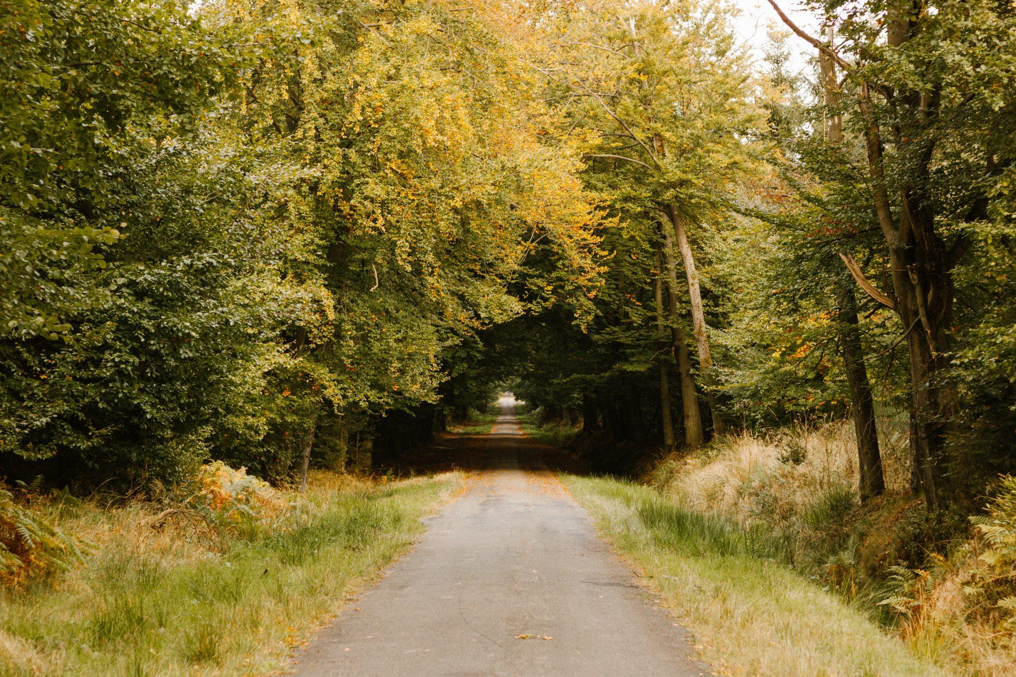Woods Domaine de Berinzenne, Belgium