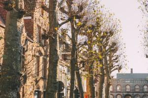 161125 Bruges 036