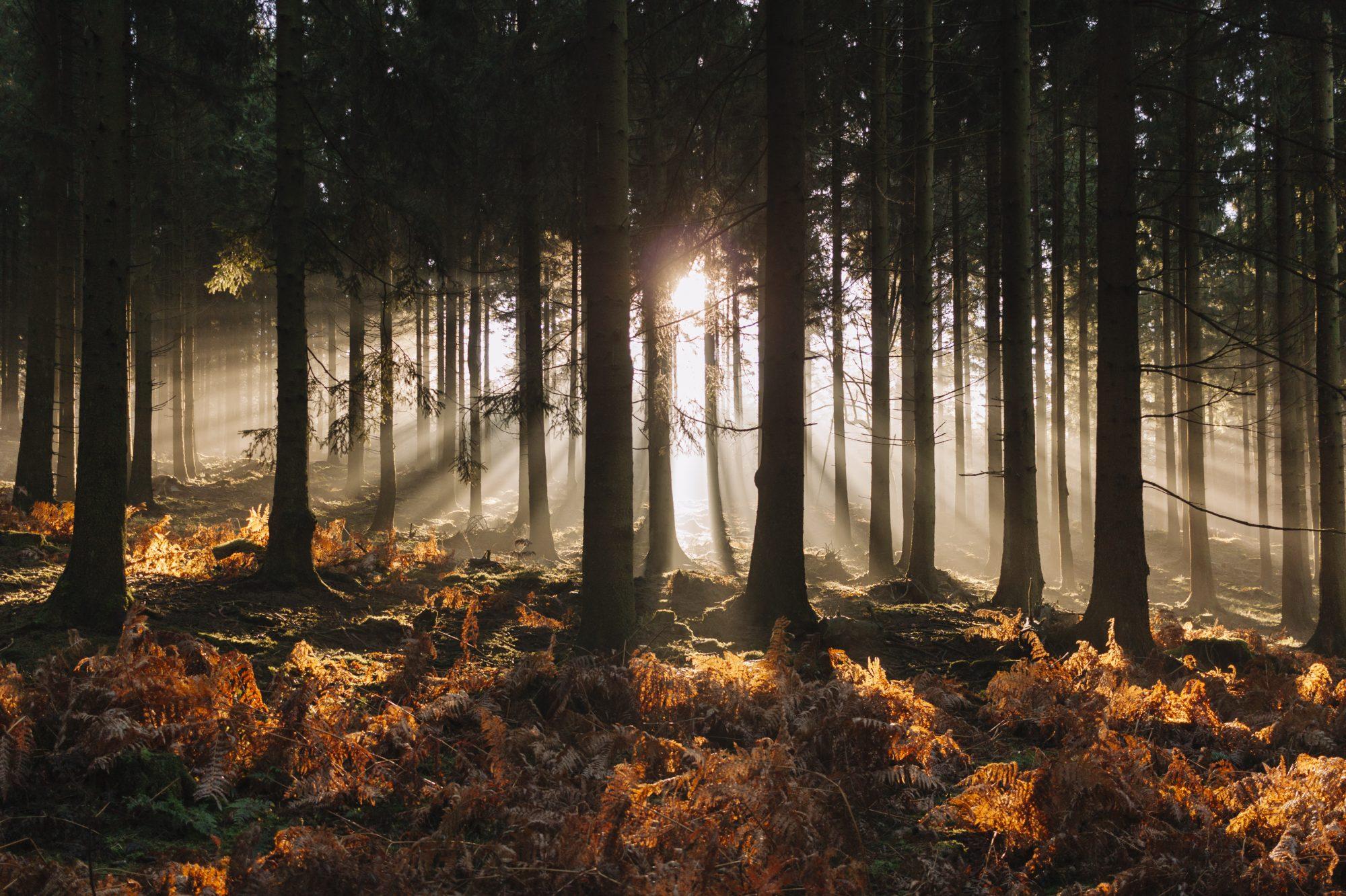 Sunny Foggy Morning