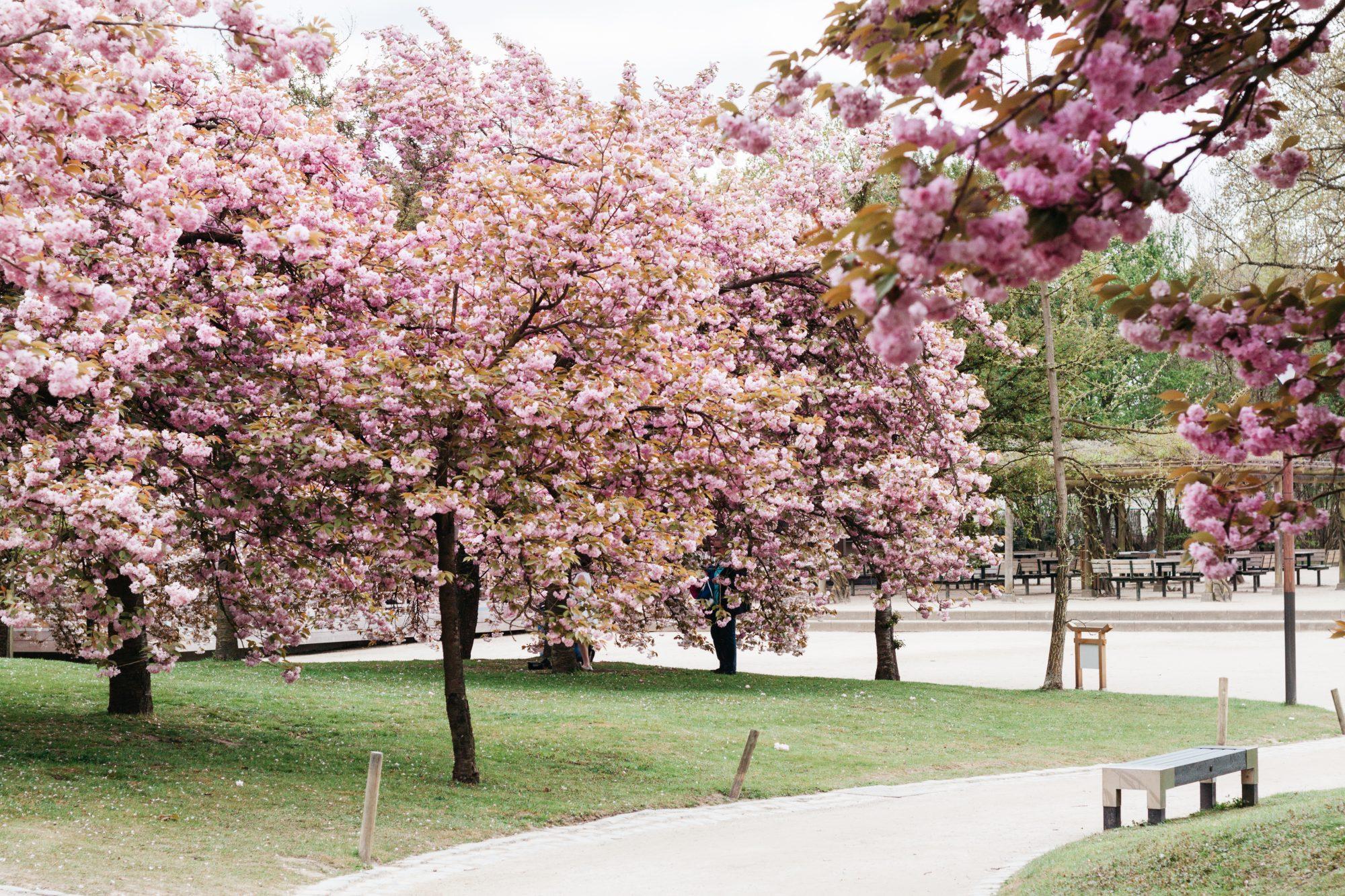 Japanese Garden of Hasselt