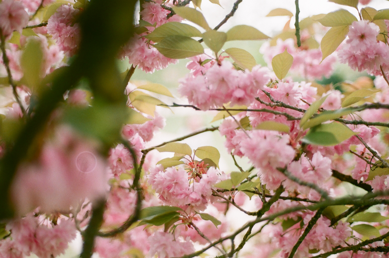 Spring through an analog lens