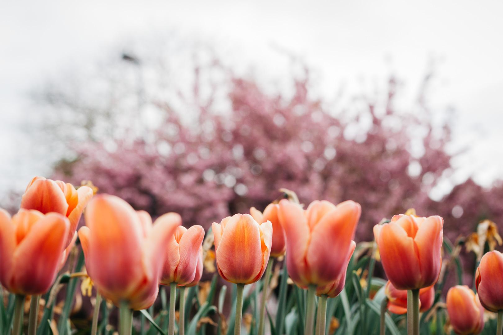 April Stories