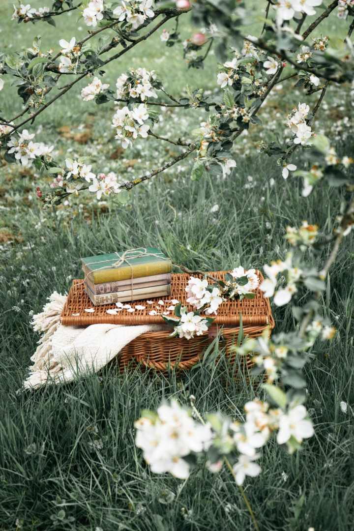 Wicker basket under a blossoming tree in May