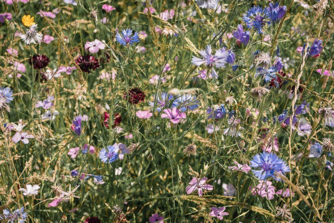 Wildflowers in July