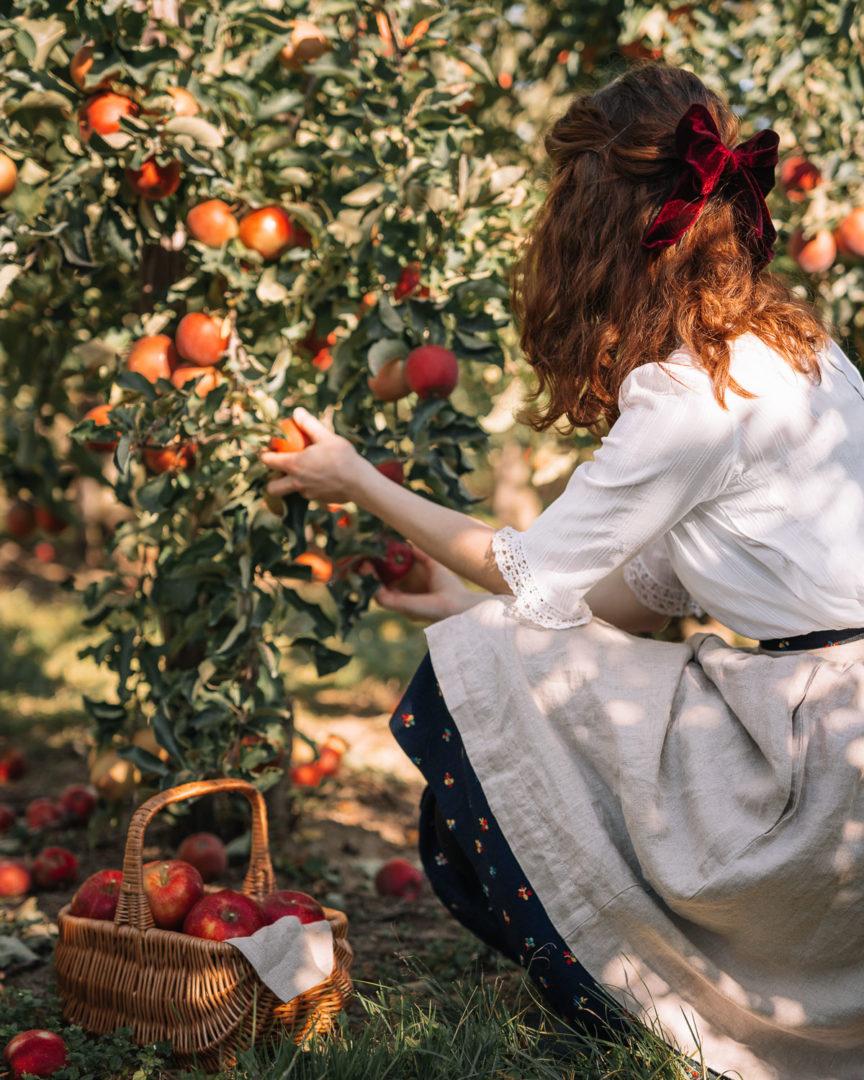 Girl picking apples in September