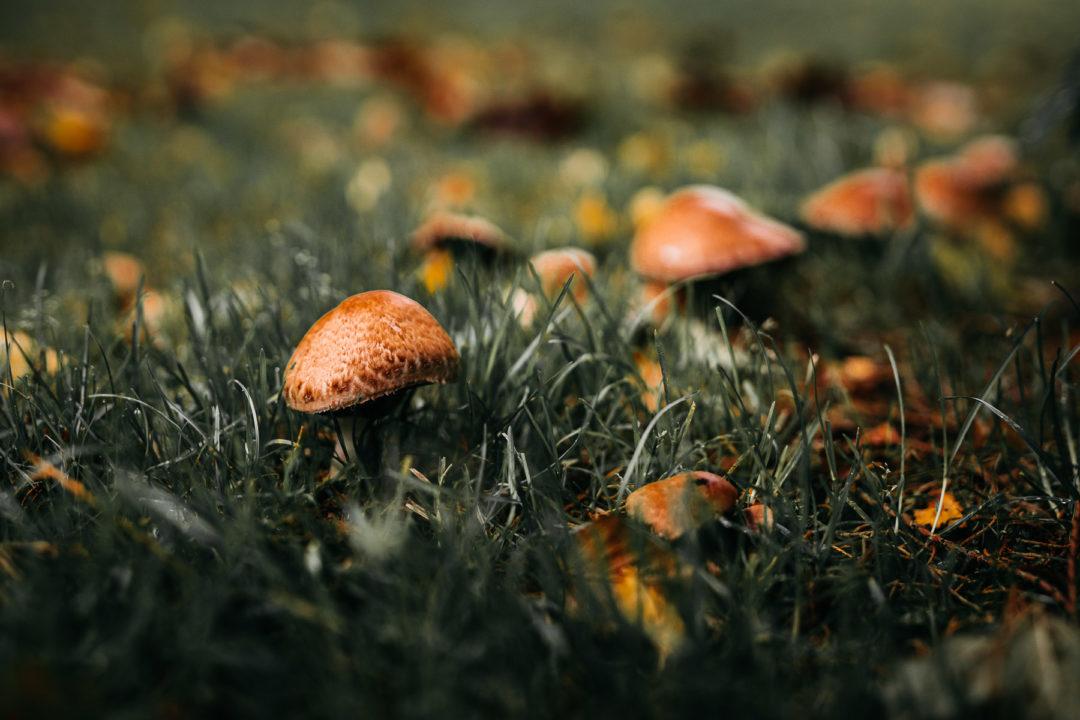 Mushrooms during October