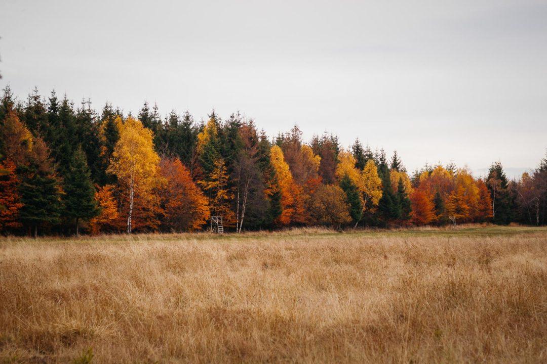 Golden-hued woods during autumn