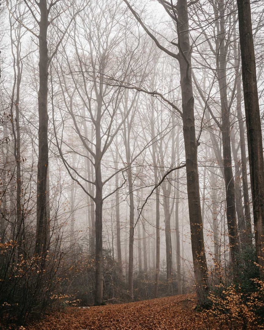 Fog in the forest during January