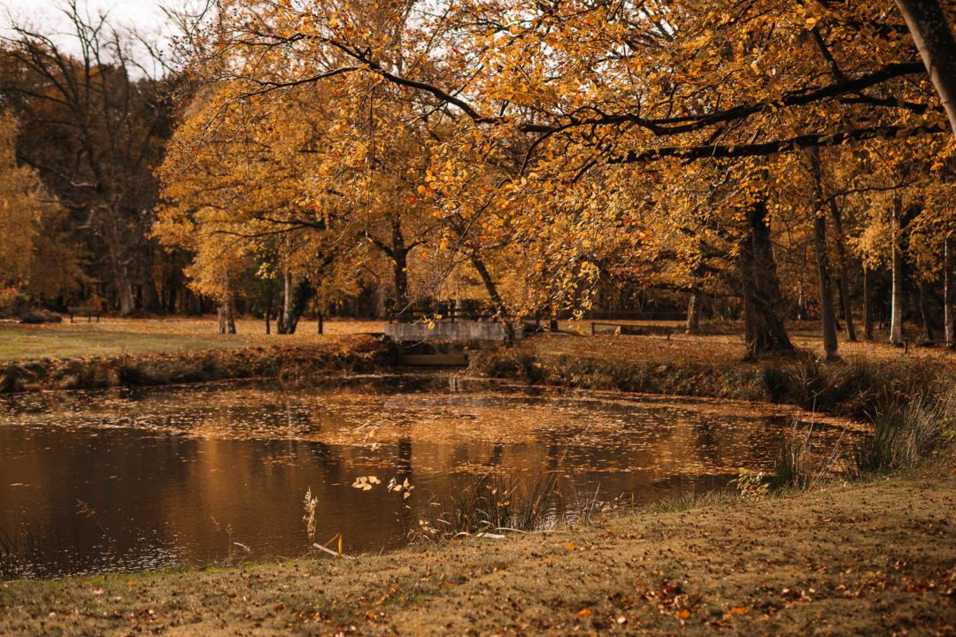 Stories of autumn, a lake covered with golden leaves during autumn.