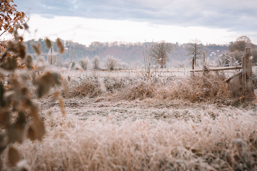 Frosty morning landscape during November of 2020