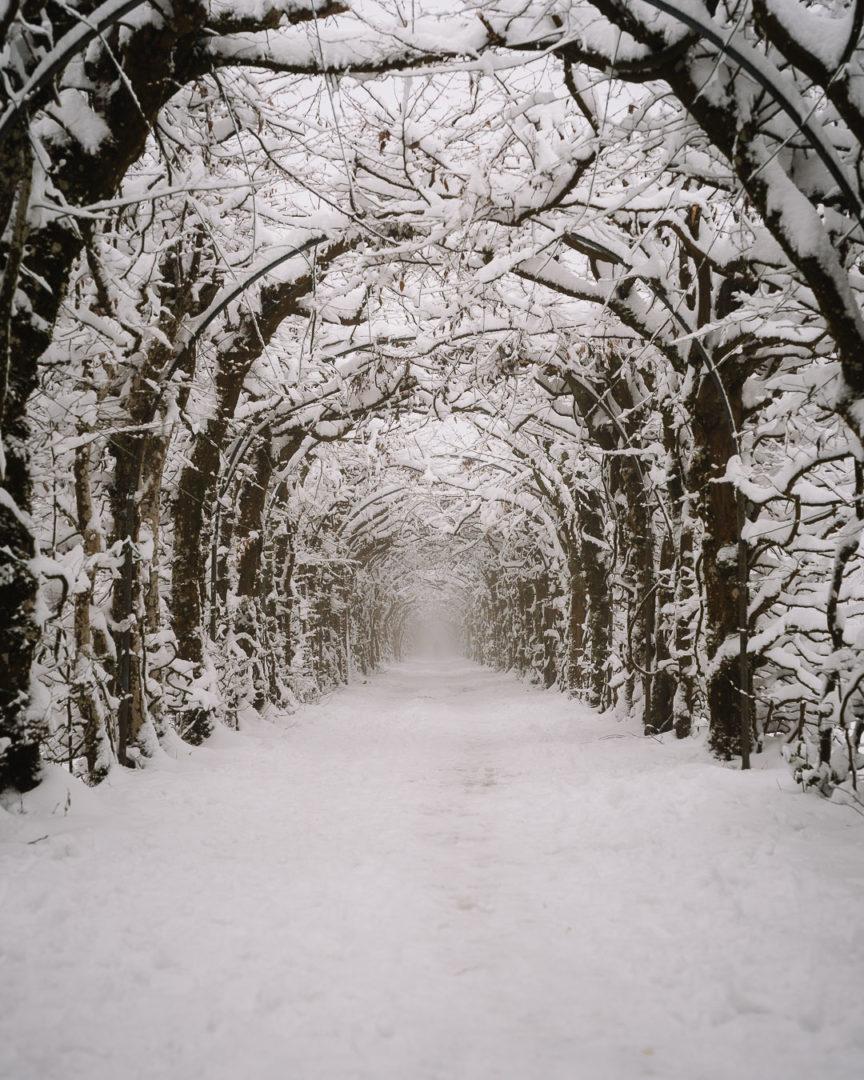 Tree tunnel La Charmille on a snowy winter day