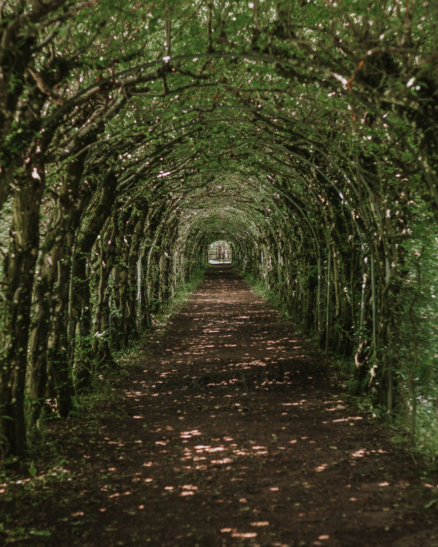 Tree tunnel La Charmille during summer