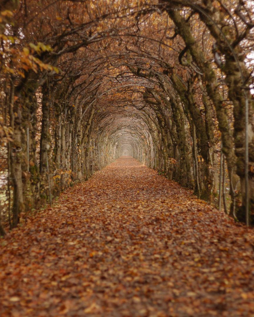 Tree tunnel La Charmille during autumn