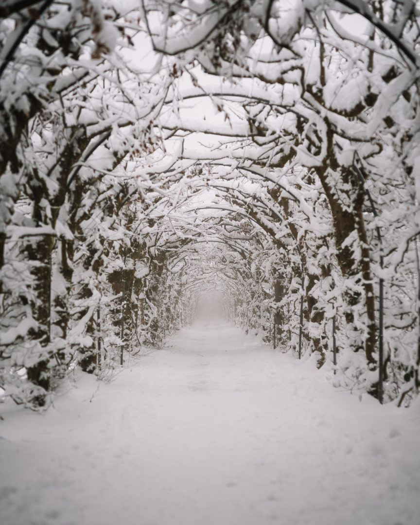 Tree tunnel La Charmille during winter